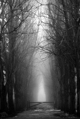 scary misty forest in black and white for halloween