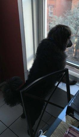 Barlow Standing Watch